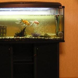 Продам аквариум (240литров)